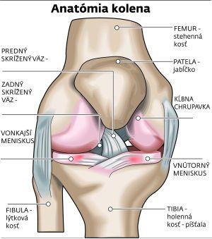Výsledok vyhľadávania obrázkov pre dopyt bolest kolene